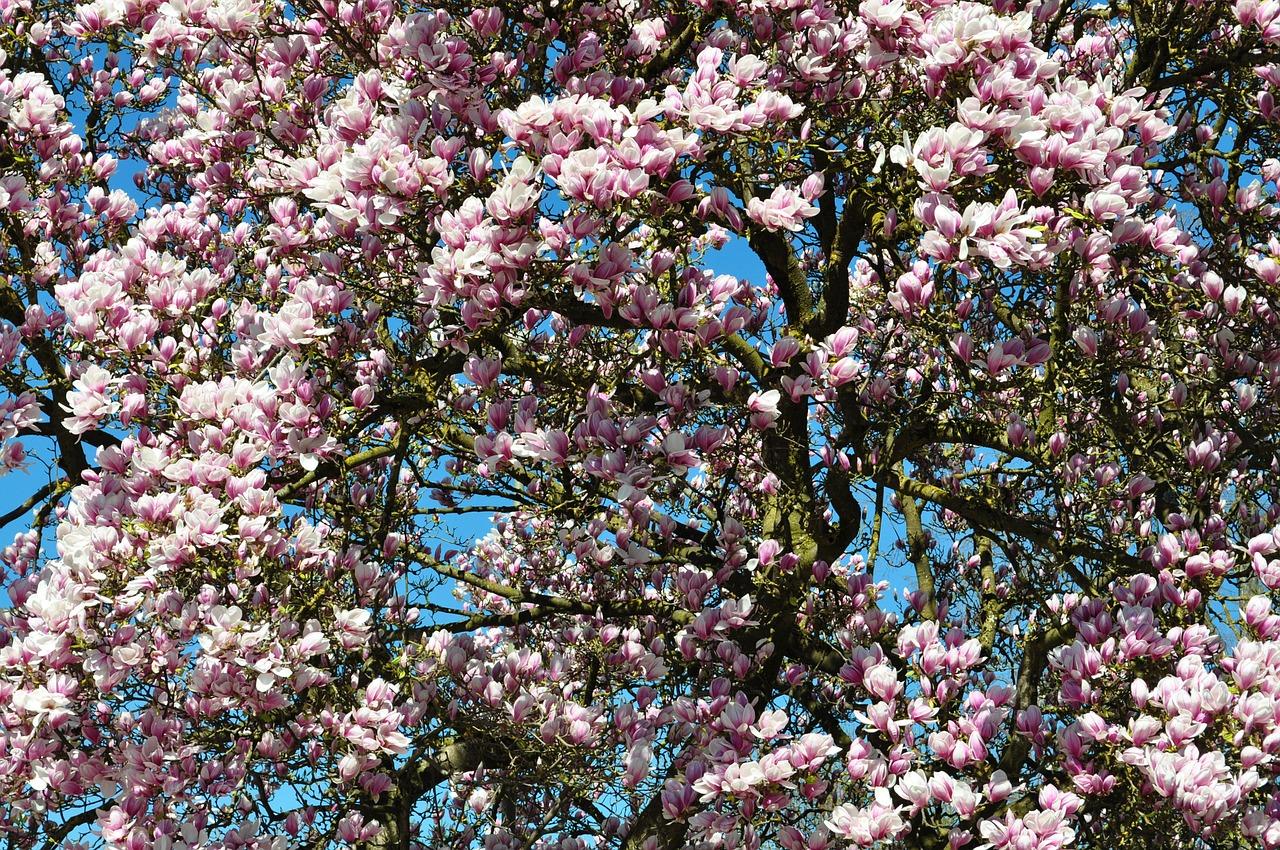 Quel arbre choisir pour son jardin ?